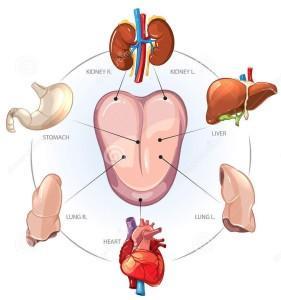chinese-tongdiagnose-kijk-binnen-menselijk-lichaam-64980794-281x300